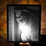 Cat Portrait nightlight